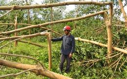 Đau xót cảnh rừng cao su Quảng Bình bị san phẳng, tiền tỷ cuốn theo bão