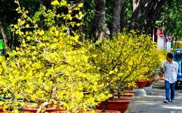 Giá trái cây và hoa cảnh trưng Tết ở TP HCM tăng cao