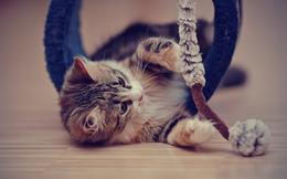 """Bí quyết """"kỳ lạ"""" từ doanh nhân thành công: Hãy ngủ, kiên nhẫn và thư giãn như loài mèo"""