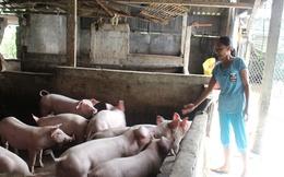 Chuồng 'trống rỗng', người nuôi lợn Hà Tĩnh vẫn chưa vội tăng đàn