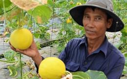 Giá trái cây ĐBSCL tăng kỷ lục, xuất khẩu rộng mở