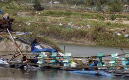 Bão cướp đi tất cả, người nuôi trồng thủy sản Khánh Hòa kiệt quệ!