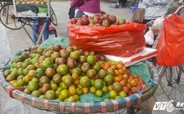 Mận đầu mùa vừa chua vừa chát, giá 200.000 đồng/kg vẫn đắt hàng