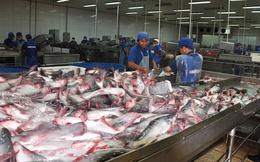 Cá tra chuẩn từ vùng nuôi để tìm cơ hội