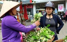 """""""Hốt bạc"""" nhờ bán hoa bưởi"""