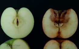 Câu chuyện 2 trái táo và bài học đắt giá mà bậc cha mẹ nào cũng cần biết để dạy con