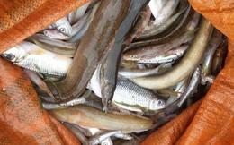 Kiểm tra nguồn xả thải tìm nguyên nhân cá chết trên sông Âm