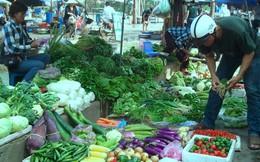 Dừa Bến Tre tăng giá kỷ lục, thiếu hàng