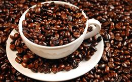 Nông dân Việt Nam bán 1 kg cà phê giá 2 USD, còn Starbucks là 200 USD