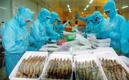 Kiểm soát an toàn dịch bệnh với tôm xuất khẩu sang Úc