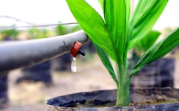Vốn tín dụng vào nông nghiệp công nghệ cao đã tăng 8,7 lần, đạt xấp xỉ 1,4 tỷ USD