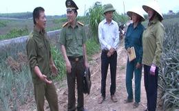 Thực hư thông tin thương lái thu mua dứa non ở Thanh Hóa