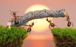 4 Kiểu người nên kết giao nếu muốn thành công