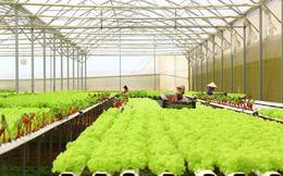 Doanh nghiệp khó tiếp cận được gói tín dụng nông nghiệp công nghệ cao