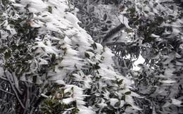 """Mùa đông năm nay có """"dị thường"""" như mùa đông năm ngoái?"""