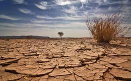 Việt Nam có ấn phẩm đầu tiên trình bày sâu về khía cạnh kinh tế và chính sách biến đổi khí hậu