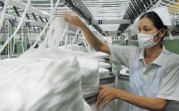 Bông Mỹ chiếm 60% thị phần tại Việt Nam