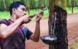Việt Nam chi 96,1 triệu USD để mua một nửa lượng cao su xuất khẩu của Campuchia