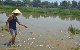 Cá chết bất thường ở Đà Nẵng, dân nghi do nhà máy xả thải