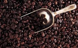 Mexico trở thành nhà sản xuất càphê và cacao lớn trên thế giới