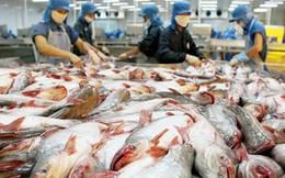 Cá tra Việt Nam xuất sang Mỹ sắp trở lại với tên gọi 'catfish'