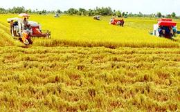 Bắt đầu chuyển hướng xuất khẩu gạo