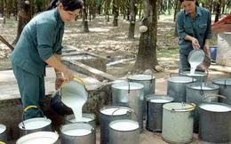 Việt Nam duy trì hơn 110 nghìn ha cao su ở nước ngoài