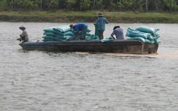 Mưa trái mùa khiến cá tra giống bị thiệt hại nặng nề