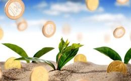 Chọn cổ phiếu phù hợp chiến lược đầu tư cổ phiếu có tỷ suất cổ tức cao