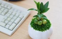 7 loại cây đem năng lượng và tài lộc đến cho căn nhà và văn phòng của bạn