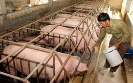 Cục Chăn nuôi: Không nên kỳ vọng giá thịt lợn sẽ cao hơn nữa