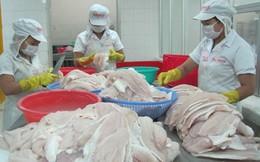 Nhiều tổ chức quốc tế lên tiếng bảo vệ cá tra Việt Nam