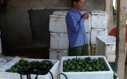 Nghệ An: Chanh Chi Khê luẩn quẩn tìm đường tiêu thụ