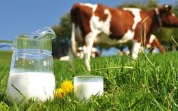 Từ 2018, các hãng sữa phải ghi rõ sữa bò tươi hay sữa bột pha nước ngay trên vỏ hộp