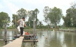 Vụ liên kết nuôi cá tra ở An Giang: Nông dân được cứu!