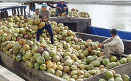Sản lượng dừa giảm, phải nhập khẩu nguyên liệu