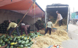 Xuất khẩu rau quả Việt Nam chiếm chưa tới 1% thị phần thế giới