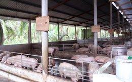 Giá lợn bấp bênh, nông dân lo lắng