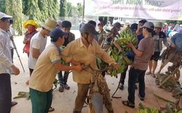 Chuối lại chín thối trên cây vì Trung Quốc giảm ăn