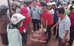 Vì sao Thái Lan không phải giải cứu heo như Việt Nam?