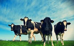 Nông nghiệp sạch đã thay đổi GTNfoods như thế nào?