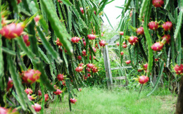 Dự tính bán trái cây 10 đồng lãi 4, thực tế bầu Đức đang lãi tới 6 đồng
