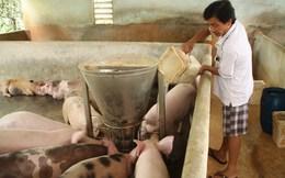 Giá heo rẻ bèo, thức ăn chăn nuôi vẫn nhập ồ ạt