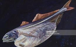 "Becamex thoái vốn, cơ hội để cá bé TDM Water ""nuốt"" cá lớn Biwase?"