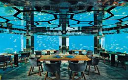 Thưởng thức bữa tối tuyệt vời ở nhà hàng dưới đại dương tại thiên đường du lịch Maldives