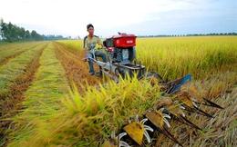Thủ tướng: 14 triệu nông dân với 78 triệu mảnh ruộng manh mún nhỏ lẻ, nông nghiệp không thể nào phát triển được!