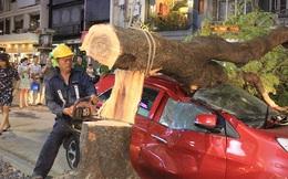 """Cây xanh bật gốc đè """"xế hộp"""" gần phố đi bộ Nguyễn Huệ"""