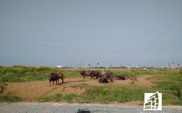 Khu công viên Sài Gòn Safari 500 triệu USD sẽ có trung tâm hành chính hiện đại