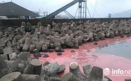 Thực hư chuyện biển Vũng Áng xuất hiện dải nước màu đỏ