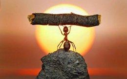 Nếu tôi luyện được đặc điểm mà bất cứ người thành công nào cũng có, bạn chẳng sợ gì thất bại!